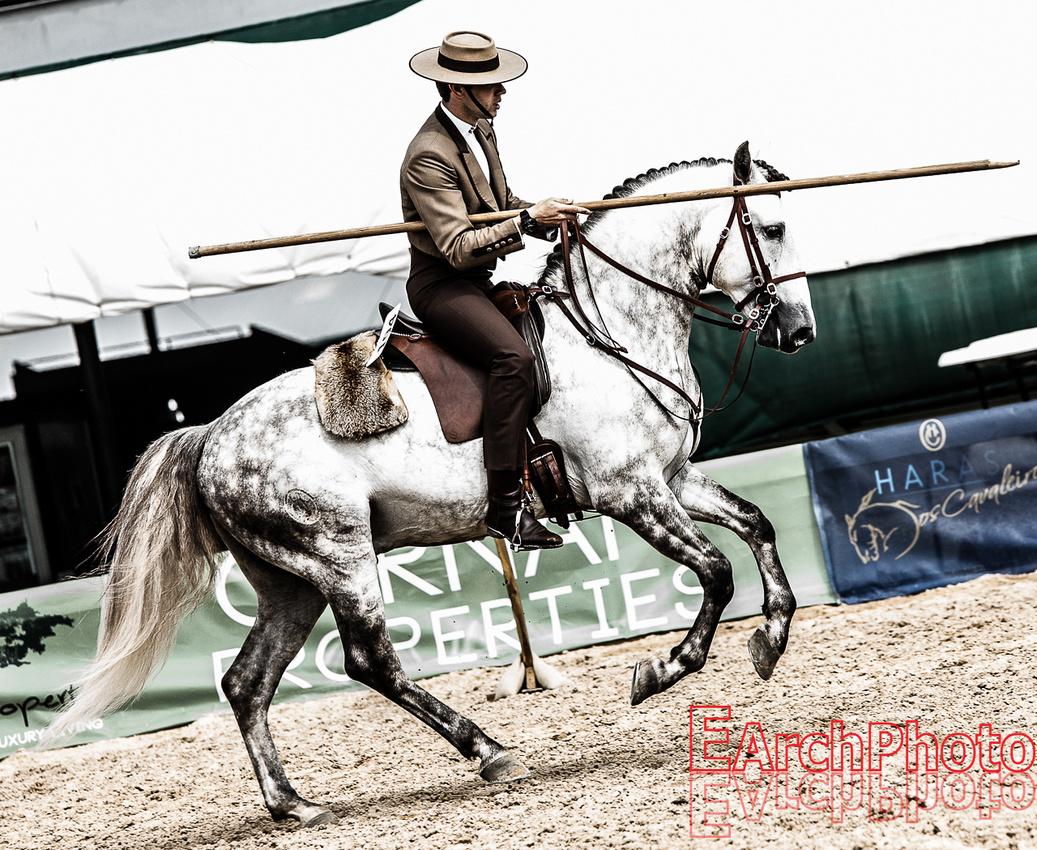 Earchphoto-Haras-Lusitanos-PinOak-2014-working-equitation-web-20